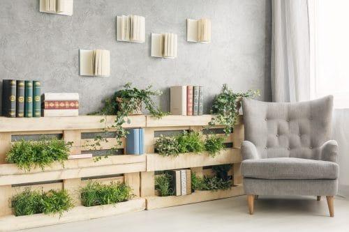Les plantes grimpantes d'intérieur