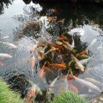 Quel est le prix de l'aménagement d'un bassin de jardin ?