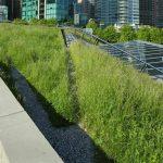 Toiture végétalisée : le coût de ce type de toit